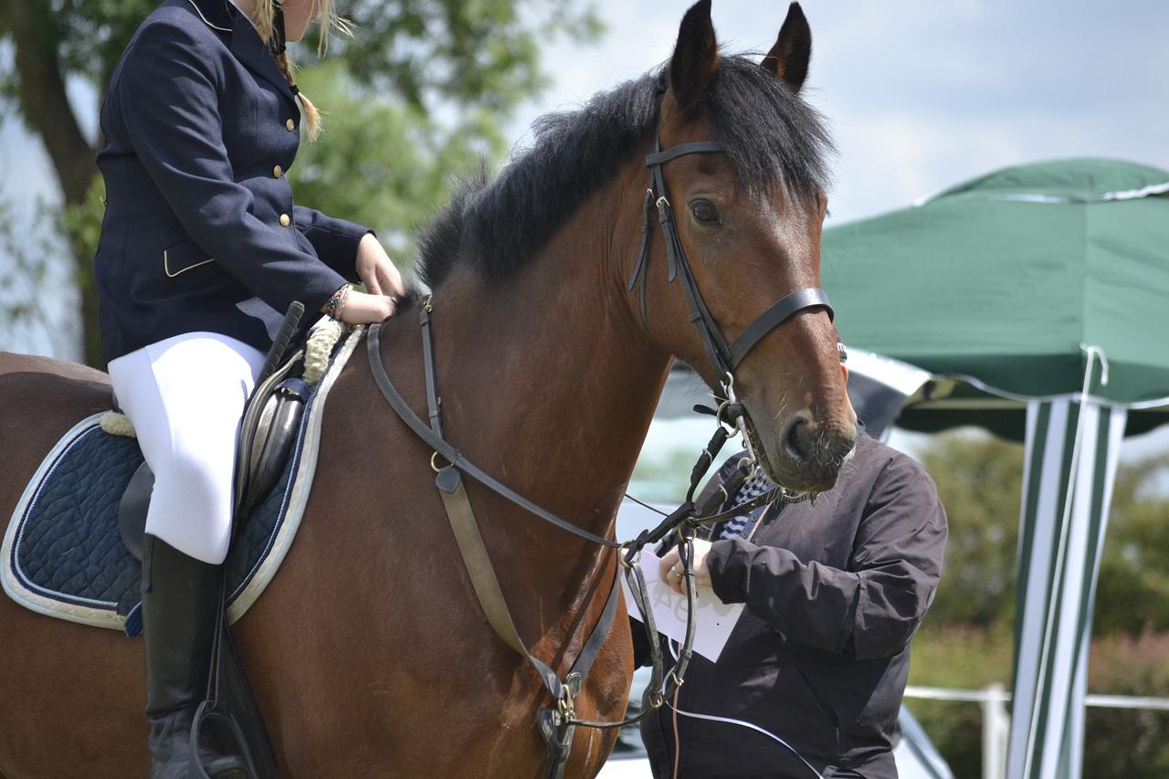 /drahtlos-kommunikationssystem-fur-pferde-reiten